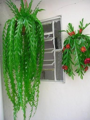 Комнатные цветы из пластиковой